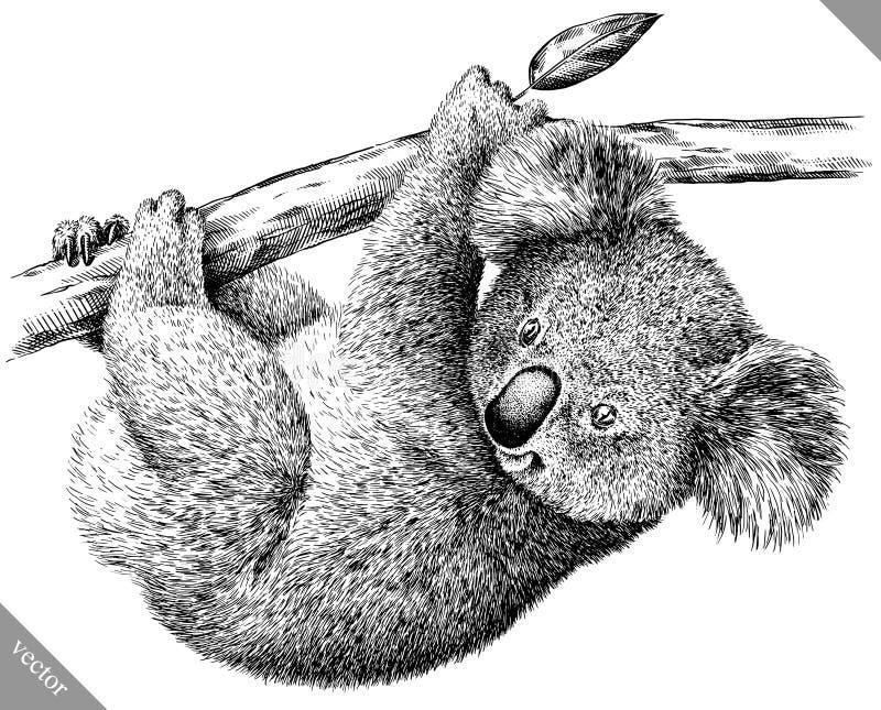Blanco y negro grabe el ejemplo aislado del vector de la koala stock de ilustración