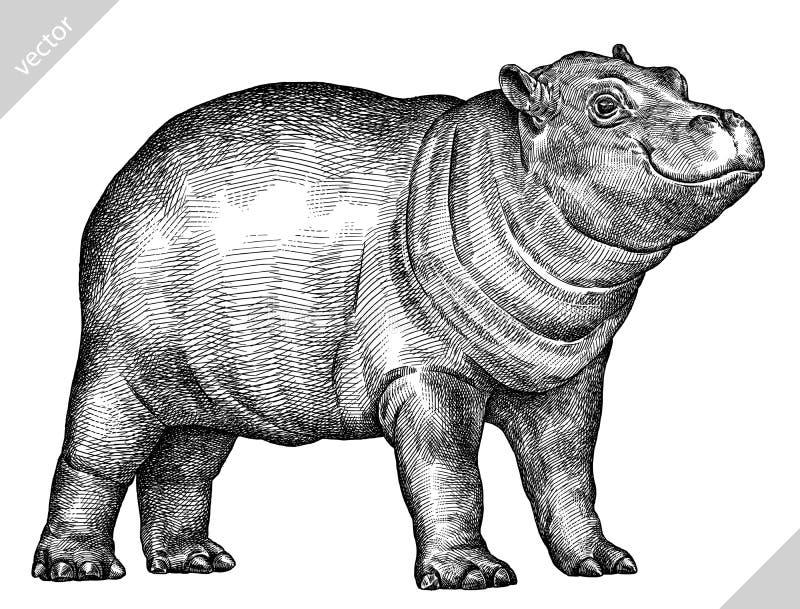 Blanco y negro grabe el ejemplo aislado del vector del hipopótamo ilustración del vector