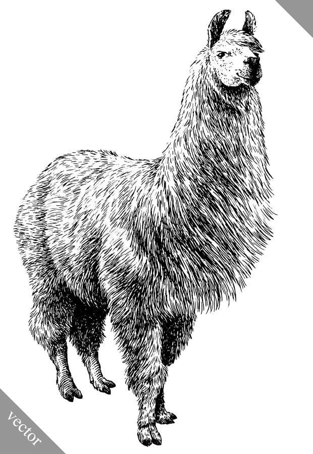 Blanco y negro grabe el ejemplo aislado del vector del lama ilustración del vector