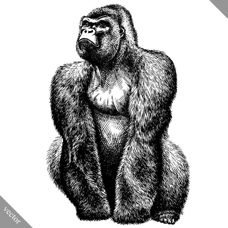 Blanco y negro grabe el ejemplo aislado del vector del mono ilustración del vector