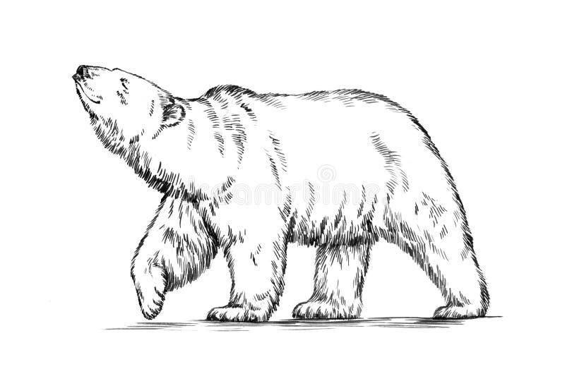 Blanco y negro grabe el oso aislado stock de ilustración