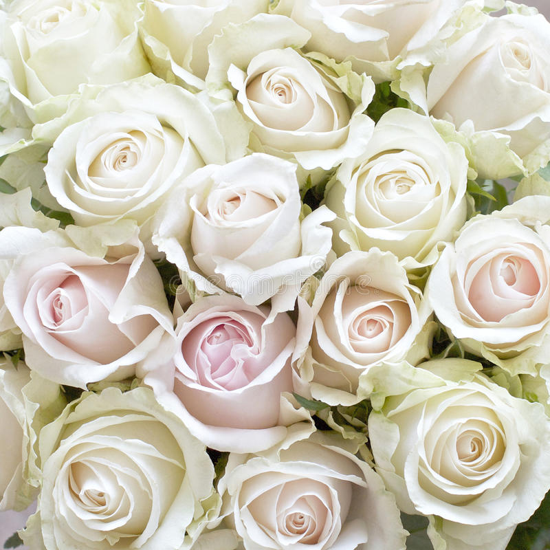 Blanco y Pale Pink Roses foto de archivo