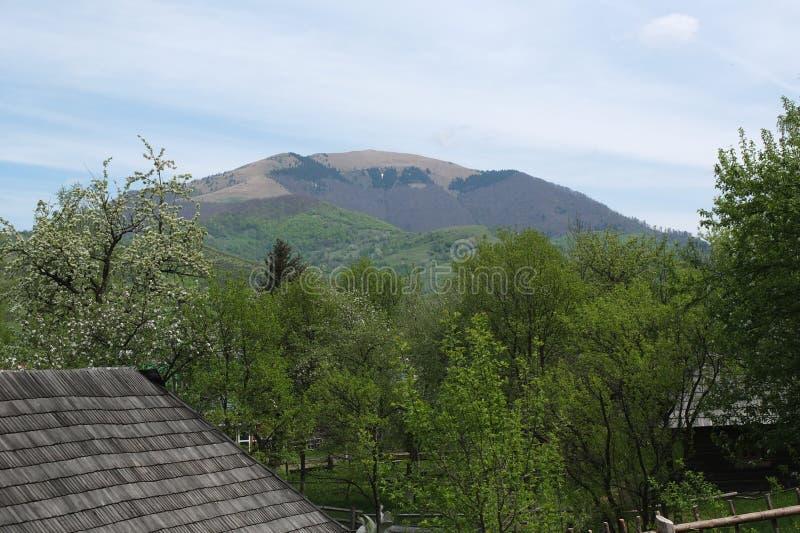 Bland bergen royaltyfri foto