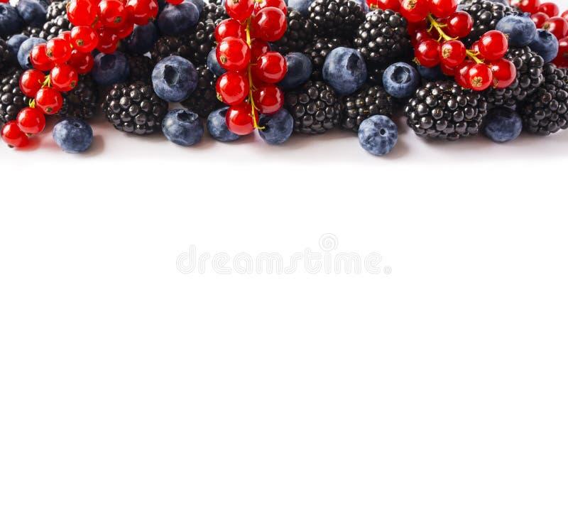 Blanda bär och frukter på gränsen av bilden med kopieringsutrymme för text Mogna blåbär, björnbär och röda vinbär på vitbaksida arkivbilder