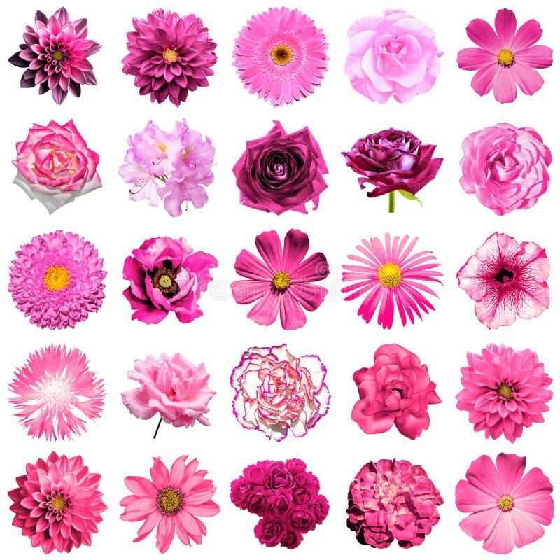 Blanda collage av naturliga och overkliga rosa färgblommor 25 i 1 arkivfoton