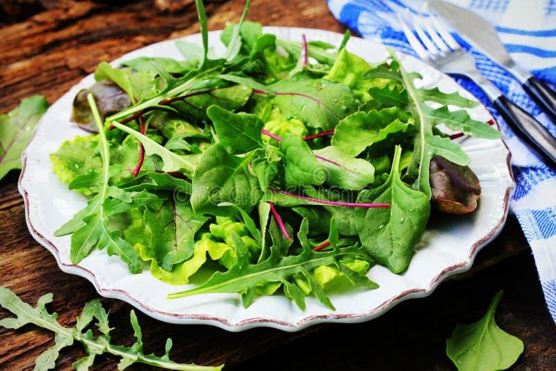 Blanda nya sidor av nyazeeländska spenat, arugula, grönsallat, beta för sallad på en mörk träbakgrund Top besk?dar royaltyfria bilder