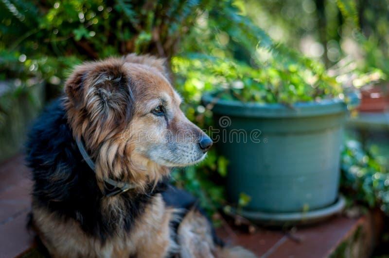 blandad-avel hund i en trädgård arkivbild