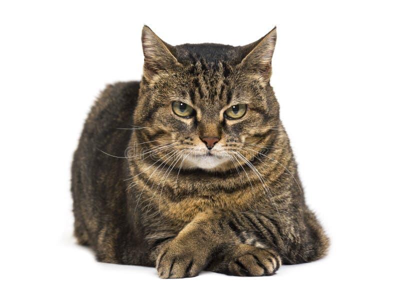 Blandad-avel katt korsade ben som ner ligger och kopplar av det korsade benet fotografering för bildbyråer