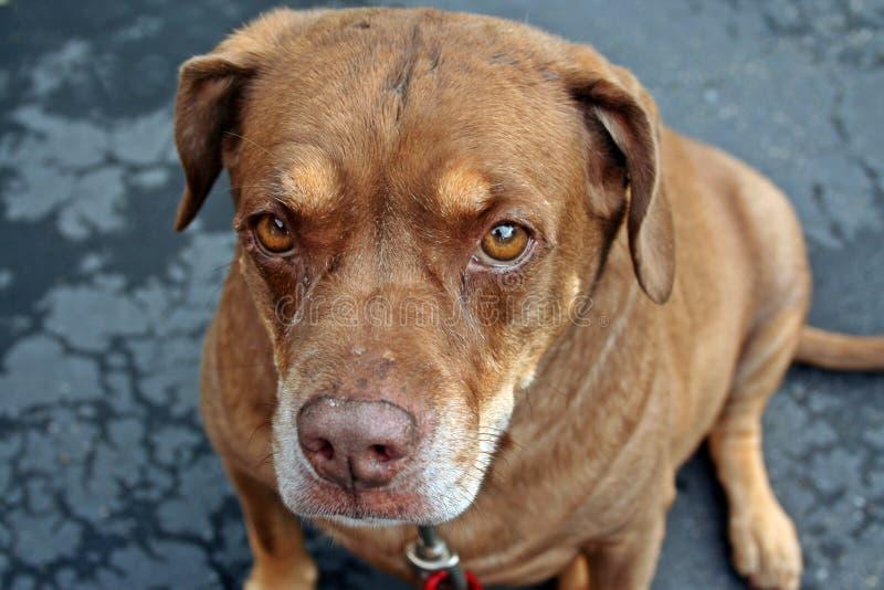 Blandad avelhund efter regn royaltyfri bild