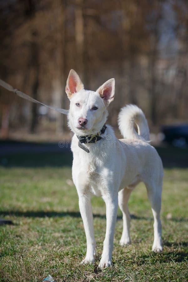 Blandad avelhund i natur royaltyfri bild