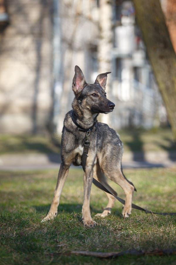 Blandad avelhund i natur arkivbild