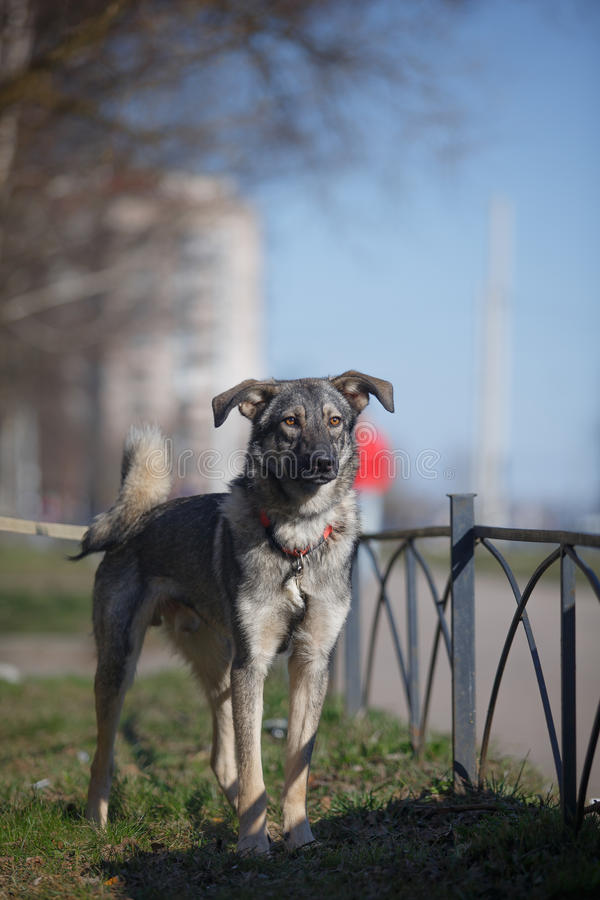 Blandad avelhund i natur royaltyfri foto