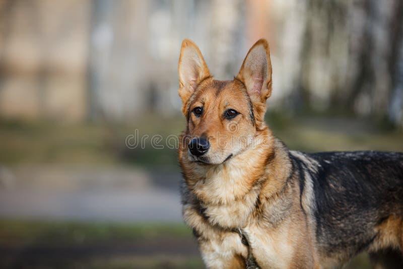 Blandad avelhund i natur arkivfoton