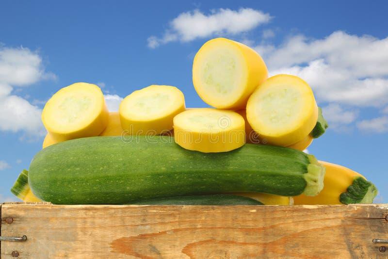 Blandad guling- och gräsplanzucchini och ett snitt en arkivfoto