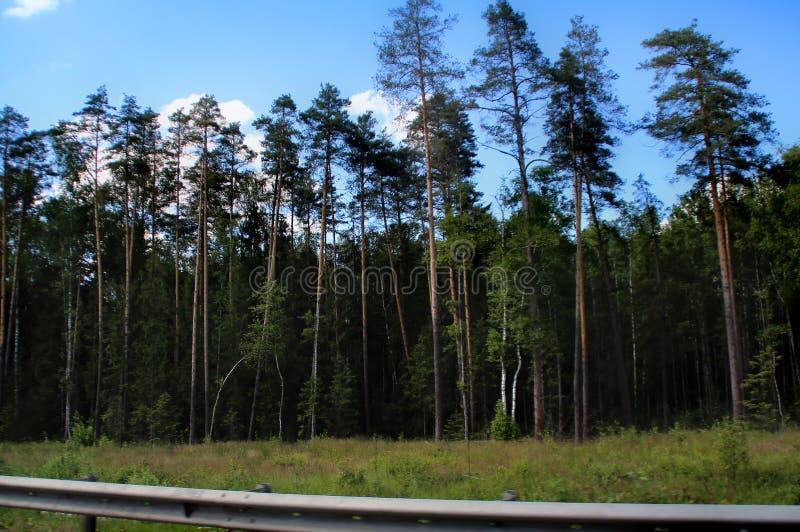 Blandad skog p? kanten av v?gen stock illustrationer