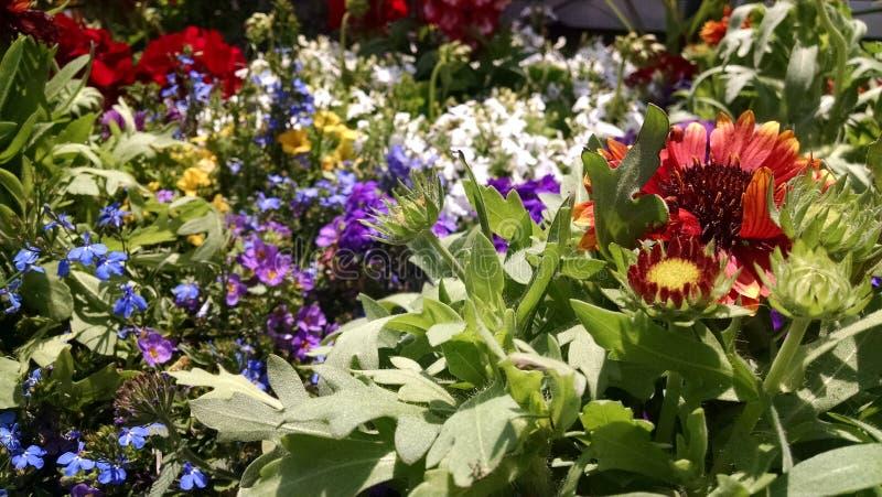 Blandade blommor royaltyfri bild