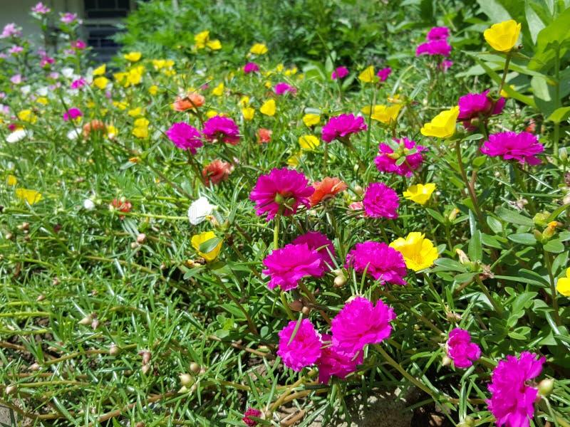 blandade blommor arkivfoton