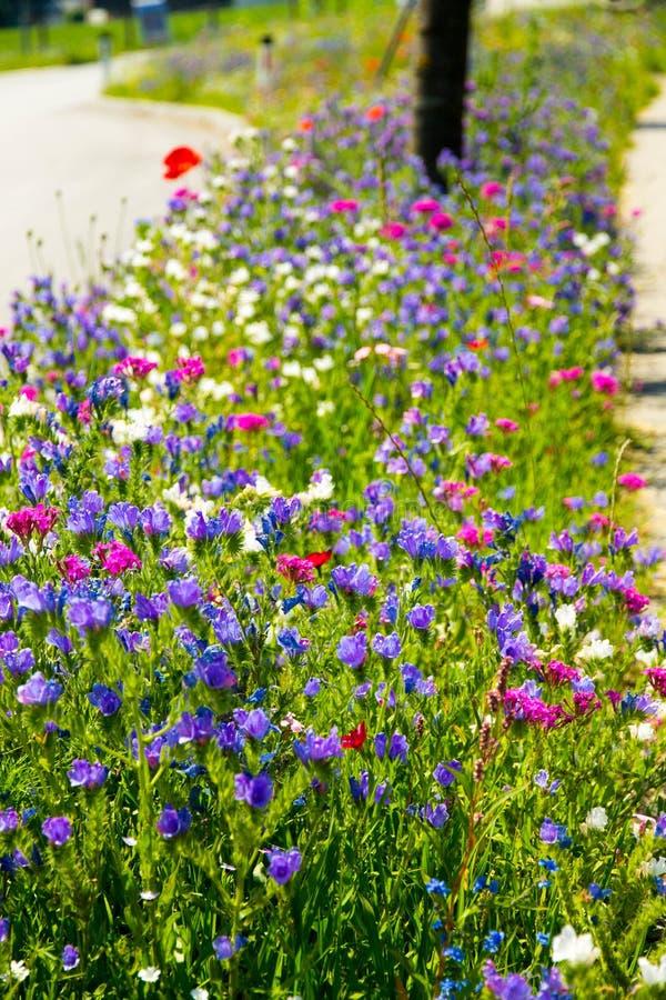 Blandade blommor för sommar på gatan fotografering för bildbyråer