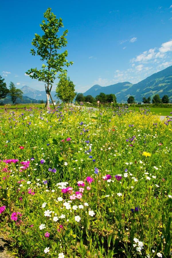 Blandade blommor för sommar på gatan royaltyfri bild