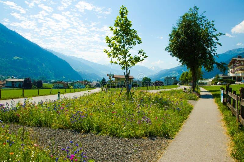 Blandade blommor för sommar på gatan royaltyfria bilder