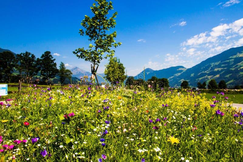 Blandade blommor för sommar på gatan royaltyfri fotografi
