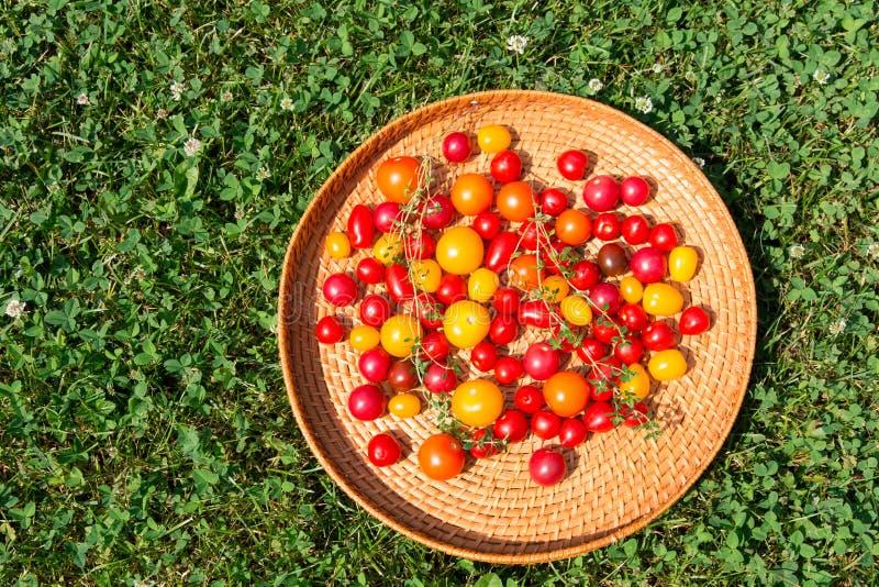 Blandade färgrika tomater royaltyfri bild