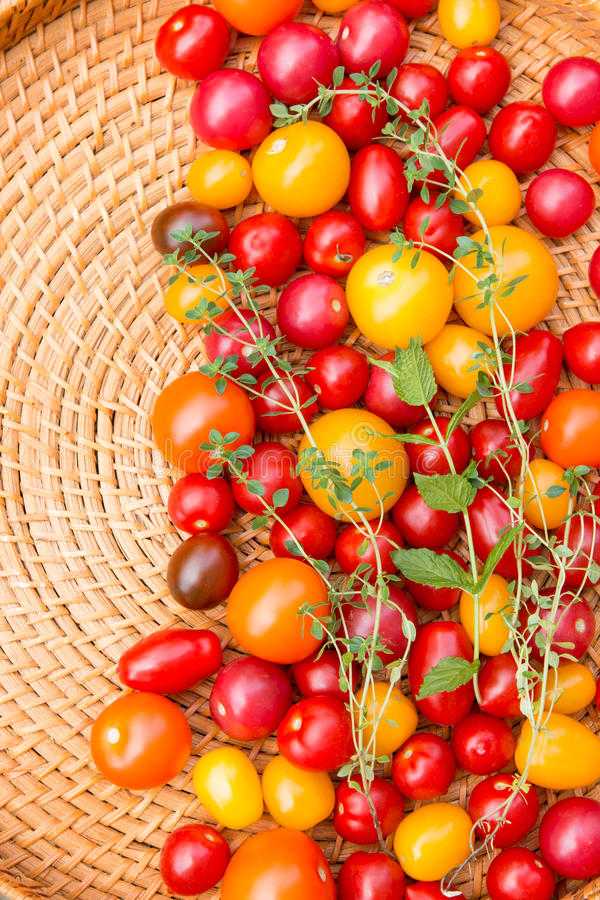Blandade färgrika tomater arkivbild