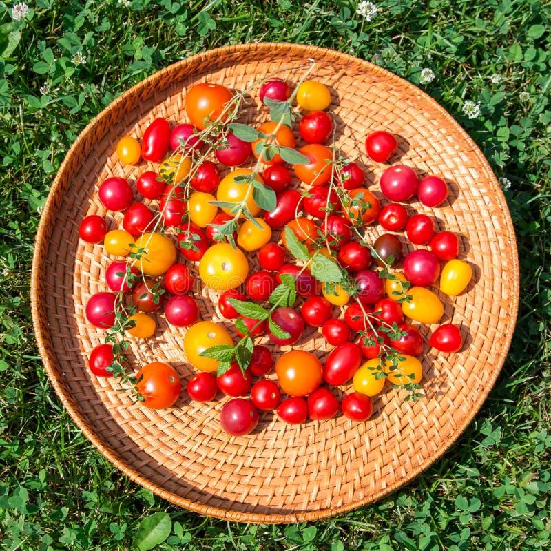 Blandade färgrika tomater arkivfoto