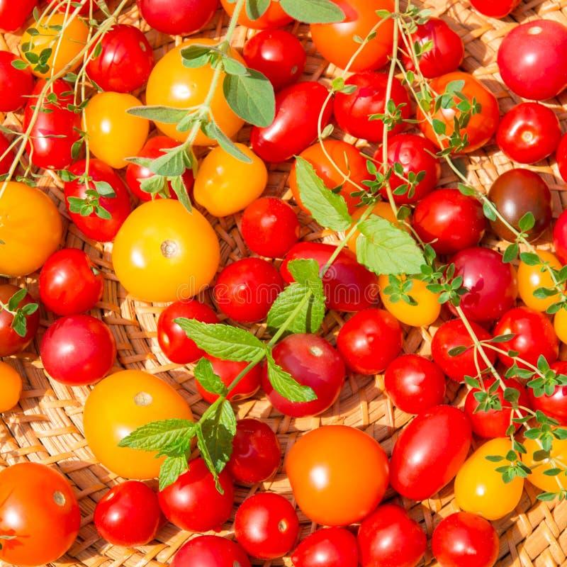 Blandade färgrika tomater royaltyfri fotografi