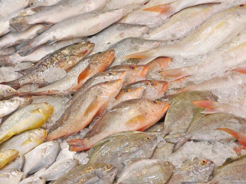 blandade fiskar market vått royaltyfria foton