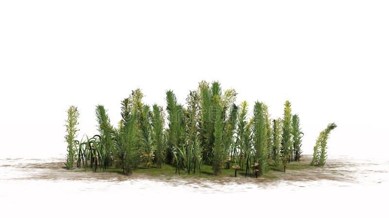 Blandade gräsplaner - olika gröna växter och brunaktiga champinjoner vektor illustrationer