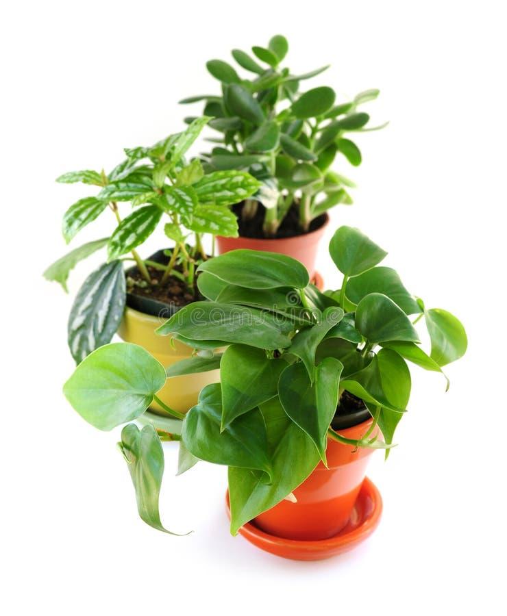blandade houseplants royaltyfria foton