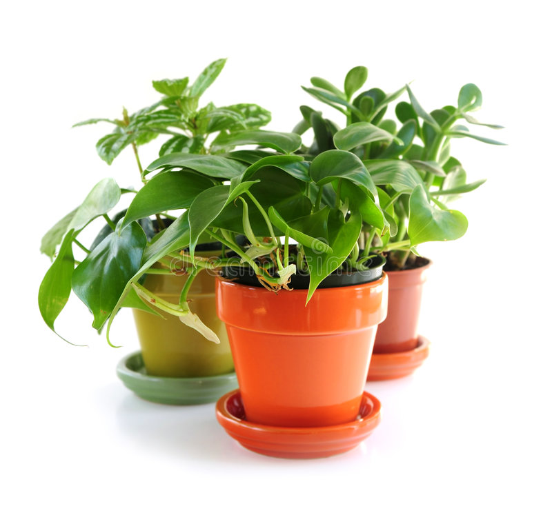 blandade houseplants royaltyfri foto