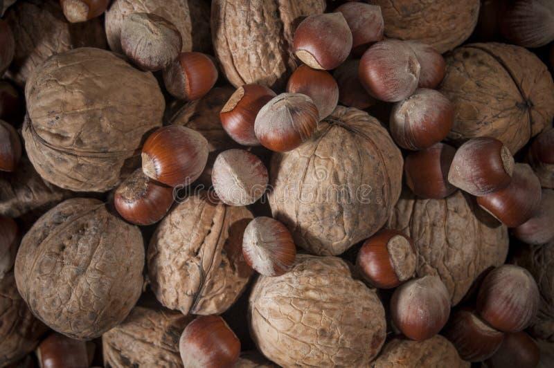 Blandade mutterhasselnötter och valnötter Bakgrund av muttrar Närbild Sund mat och livsstil royaltyfri bild