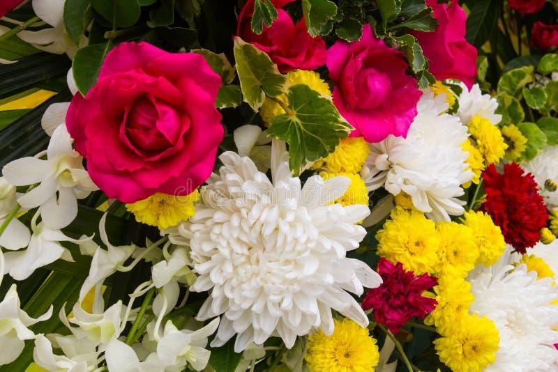 Blandade rosa rosor arkivbilder