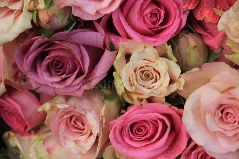 Blandade rosa rosor royaltyfri bild