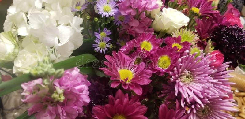 Blandade så vänliga blommor royaltyfri foto