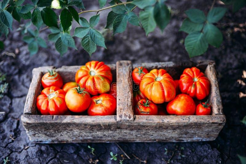 Download Blandade Tomater I Bruna Pappers- Påsar Olika Tomater I Bunke Arkivfoto - Bild av nytt, kock: 76701182
