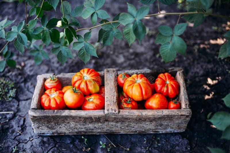 Download Blandade Tomater I Bruna Pappers- Påsar Olika Tomater I Bunke Fotografering för Bildbyråer - Bild av livsmedelsbutik, platta: 76701327
