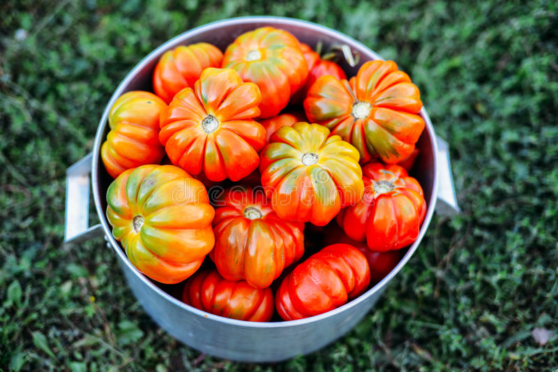 Download Blandade Tomater I Bruna Pappers- Påsar Olika Tomater I Bunke Arkivfoto - Bild av clean, blandade: 76702060