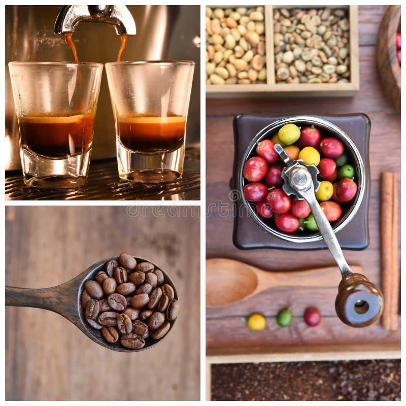 Blandning av den kaffebönor och koppen kaffe med nya kaffebönor i molar arkivfoto