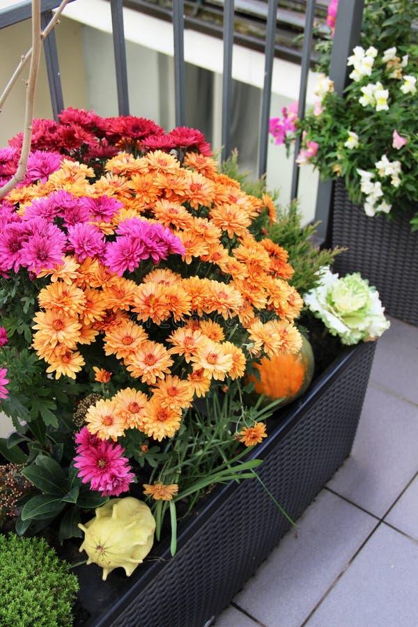 Blandning av härliga blommor i nedgångterrassträdgården arkivfoton