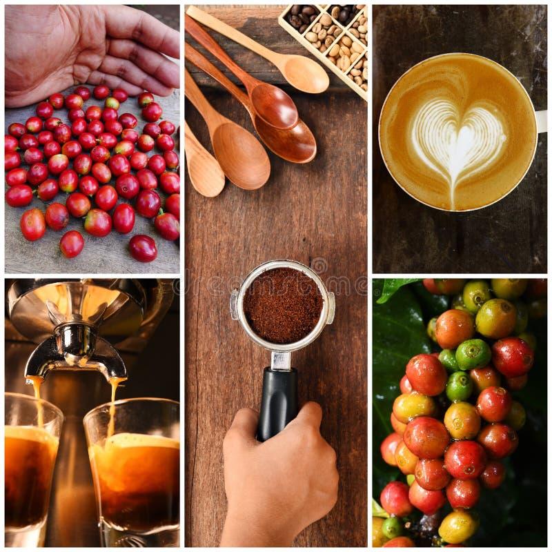 Blandning av kaffebönor och kaffeträdet med koppen kaffe royaltyfri foto