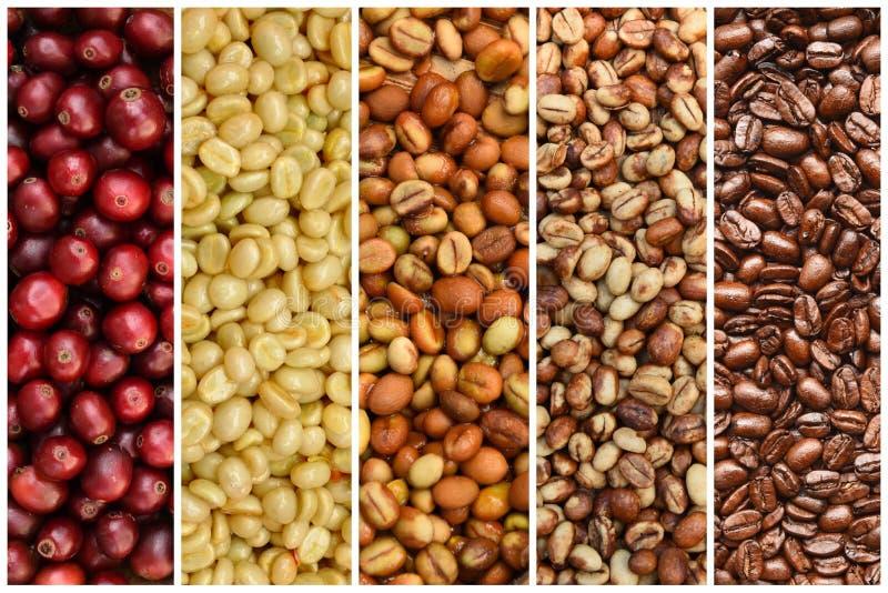 Blandning av kaffebönor och nya kaffebönor royaltyfria foton