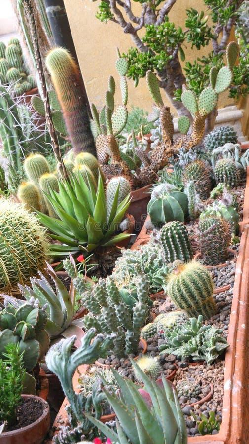 Blandning av många suckulenter och kaktuns med korstörnar och taggar arkivbilder