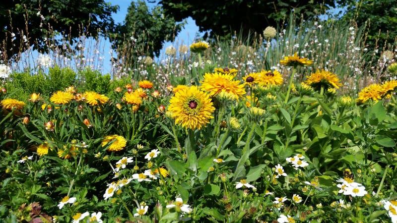 Blandningblommor som blommar i sommarträdgård arkivbild