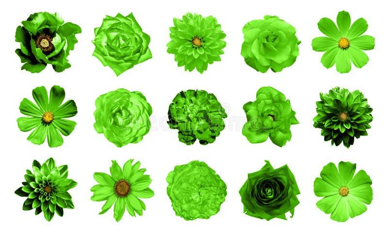 Blandningcollage av naturliga och overkliga gröna blommor 15 i 1: dahlior primulor, perenn aster, tusenskönablomma, rosor, isoler royaltyfri bild