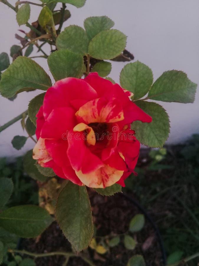 Download Blandningen steg fotografering för bildbyråer. Bild av steg - 106837253