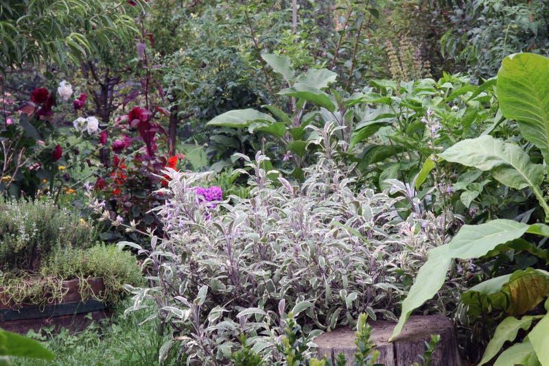 Blandningsgrönsak och säng för örtträdgård royaltyfria foton