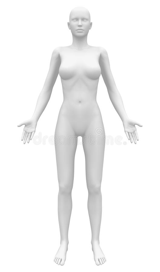 Free Blank Anatomy Female Figure - Front View Royalty Free Stock Photography - 41041467